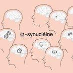 alpha synucleine